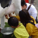 搾乳の体験